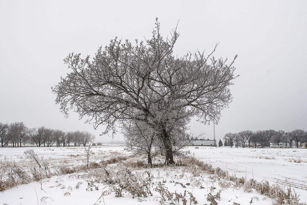 Snow-White-1.jpg