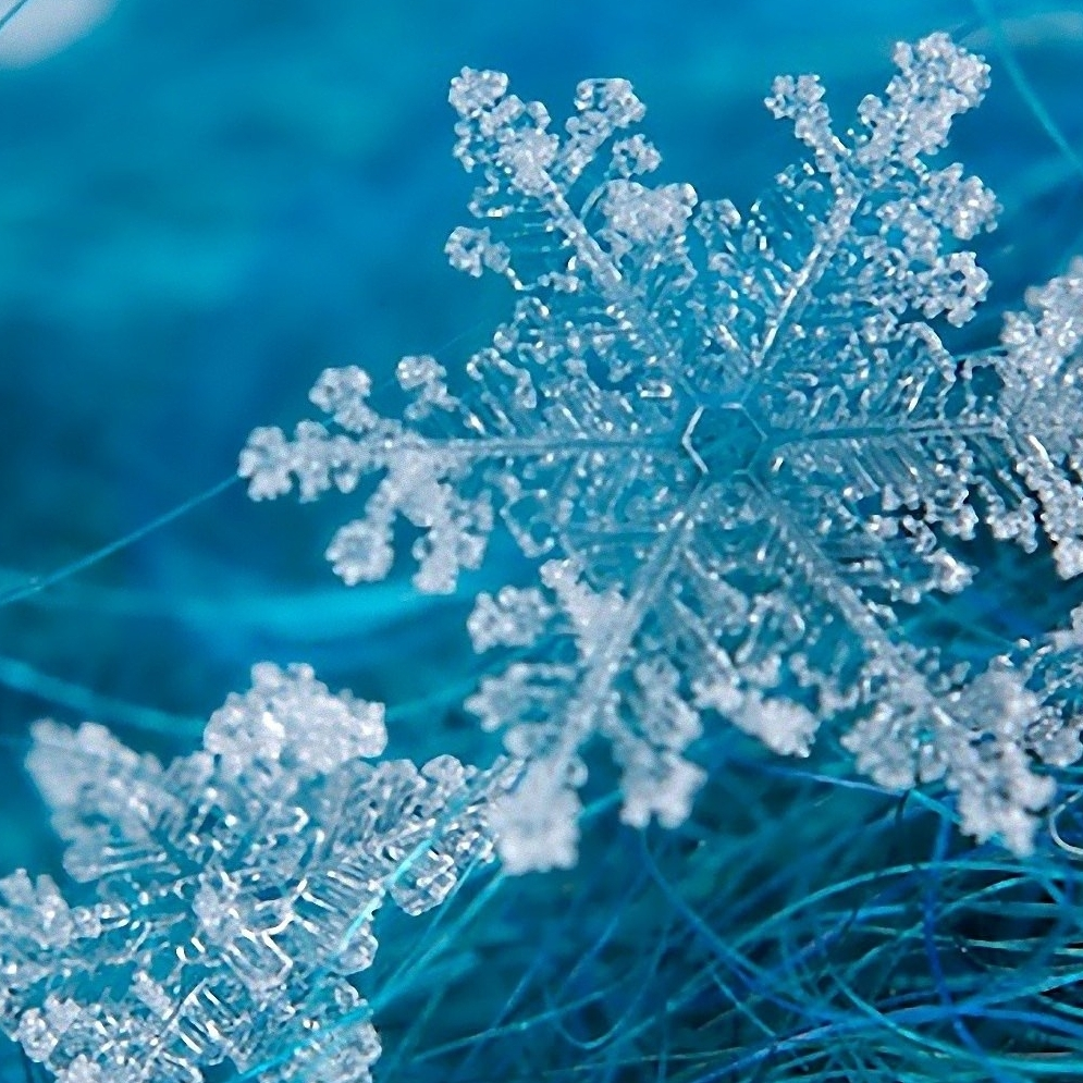 Snowflakes-Grass-surface-Wallpaper.jpg