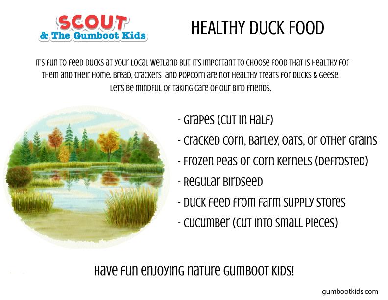 healthy duck food .jpg