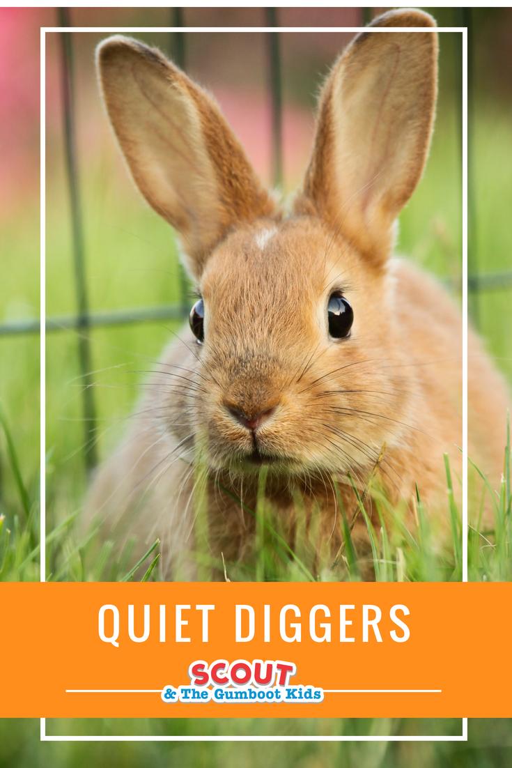 quiet diggers.png