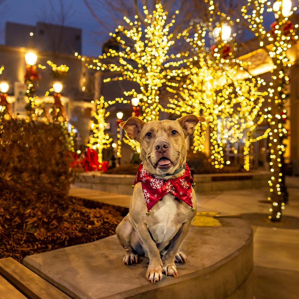 MGM Springfield- dog photo