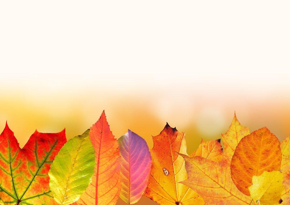 autumn-1649440_1920.jpg