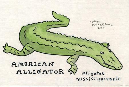 JohnP-Alligator.jpg