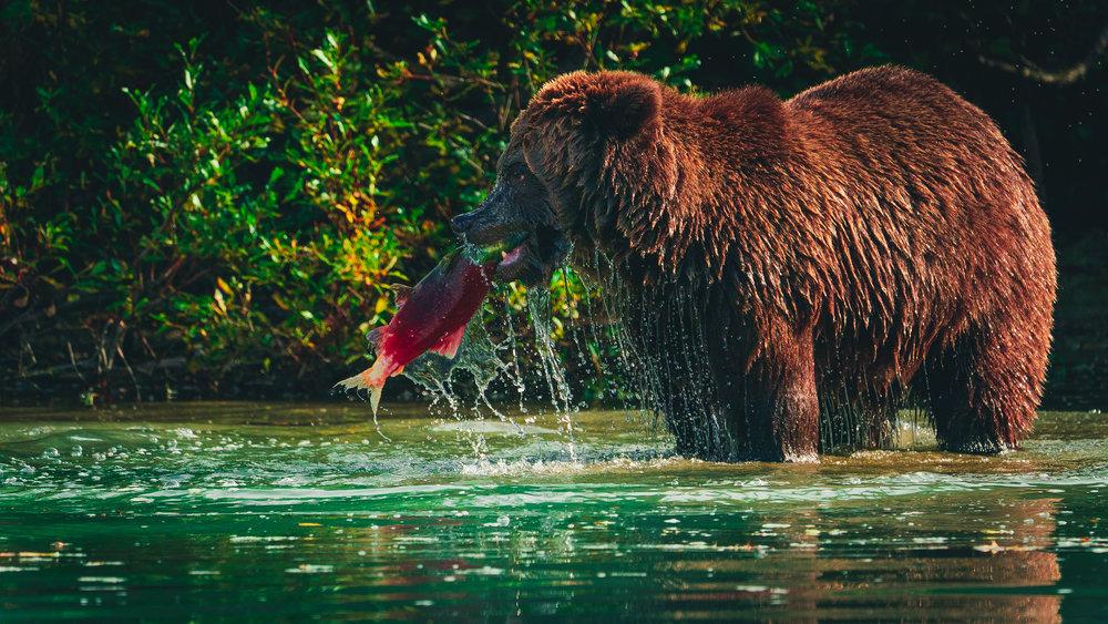 Sony - Knik Glacier & Lake Clark Alaska