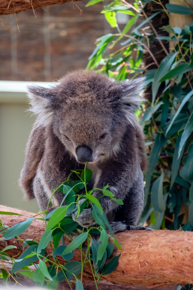 AUSTRALIA 2017-27.jpg