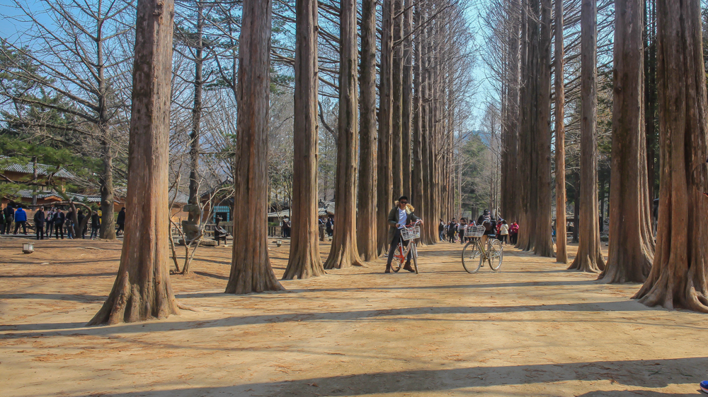one of nami island's lanes