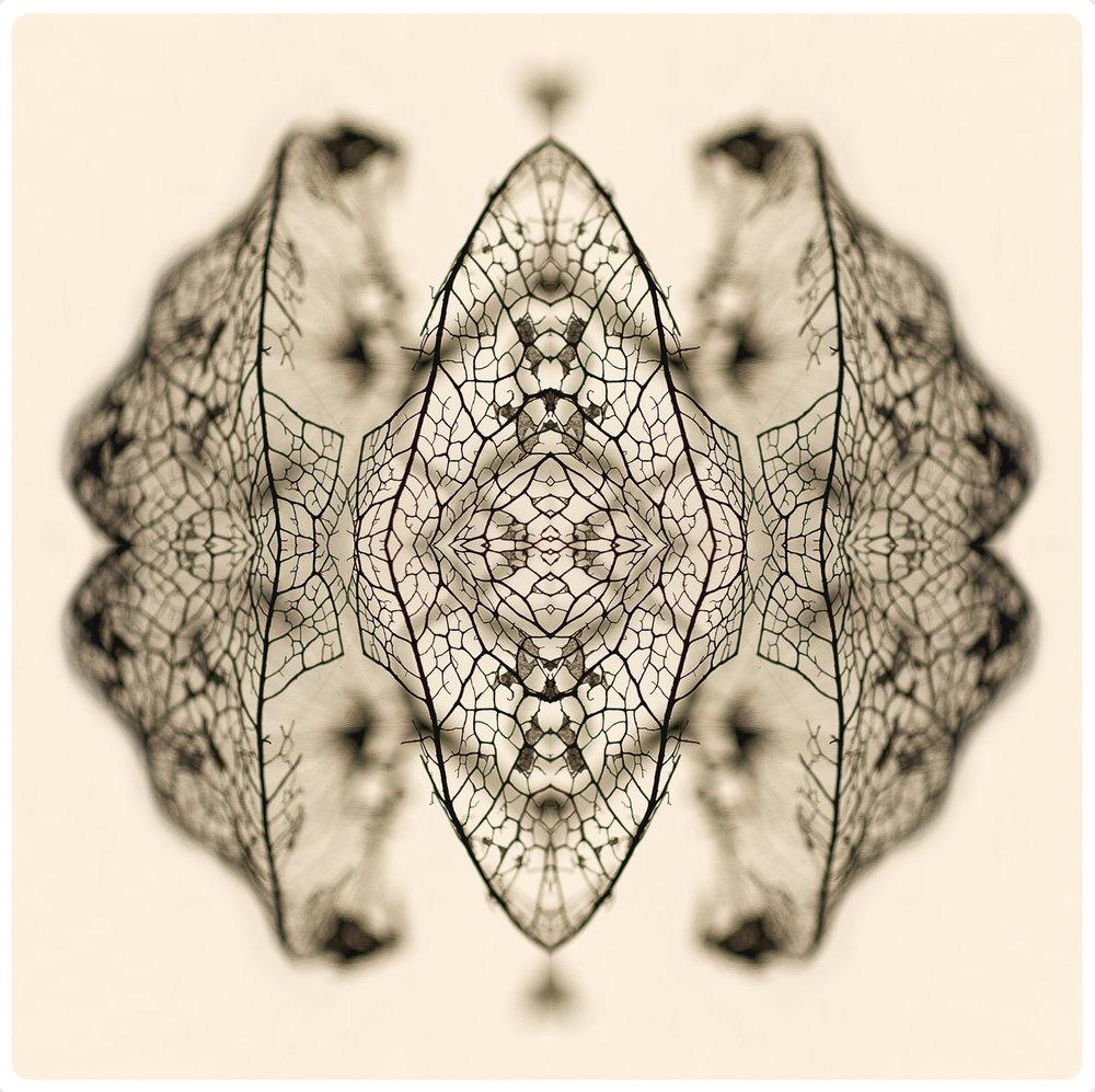 carboniferous.jpg