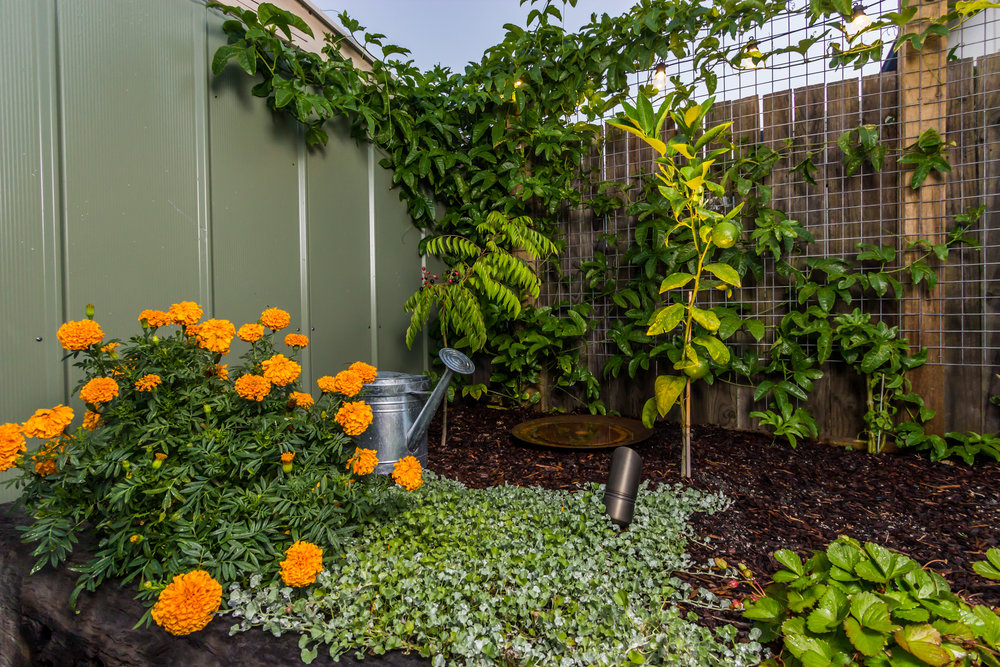 39 Parry St Landscaping - 07.jpg