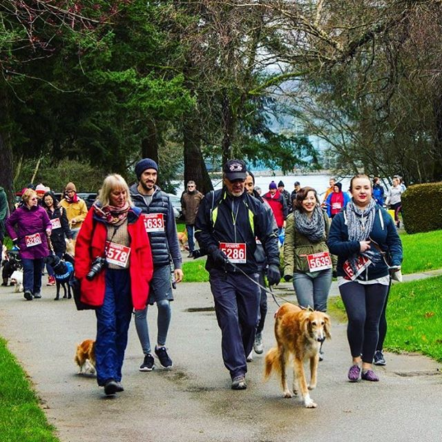 It's day 8 of the 12 Days of Race Force, and we are looking back at a near perfect day of volunteering. . . . One of our favourite events of the year is the @RunGoApp Dash For Dogs. What started out as a solution for getting lost, now includes an annual run. The event consists of a 10km, 5km, or 2km walk or run through the beautiful Stanley Park. Race Force will be back again next year, because we just can't get enough of the puppies, and the fact it supports the @bcandalbertaguidedogs. Plus, there are pancakes at the end! . . . Only 4 days until our end of year celebration. This is your last chance to RSVP and secure your spot! . . . #RaceForce #RaceForceVancouver #RFVan #nonprofit #vancity #charity #volunteering #giveback #socialgood #bike #vancouver #fitness #runvan #fitspo #health #joggers #yvr #running #community #hellobc #explorebc #health #thesweatlife #fitspo #motivation #DashForDogs
