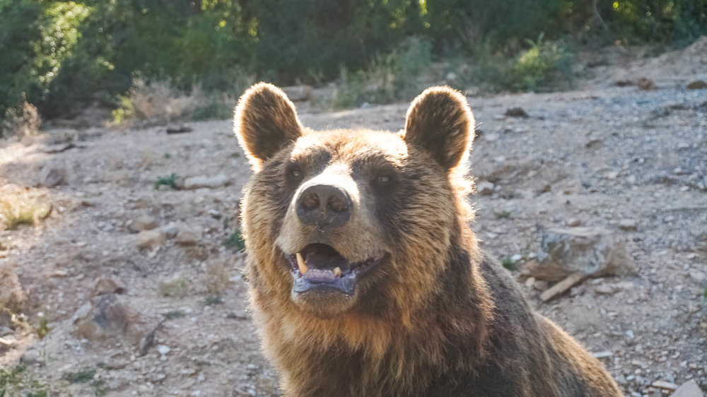 kosovo bear sanctuary pristina