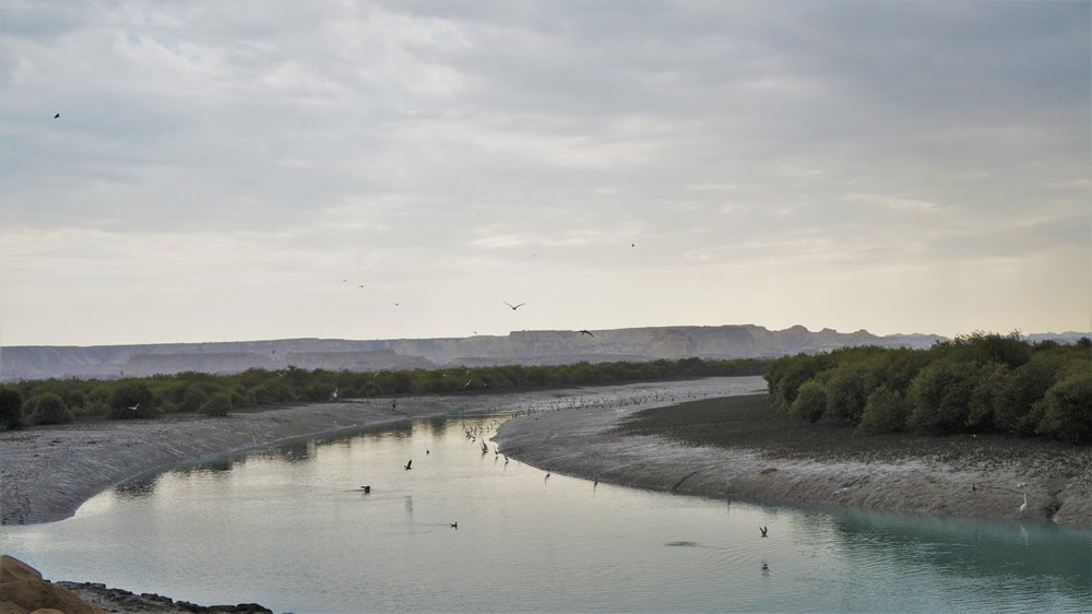 mangrove forest qeshm island iran
