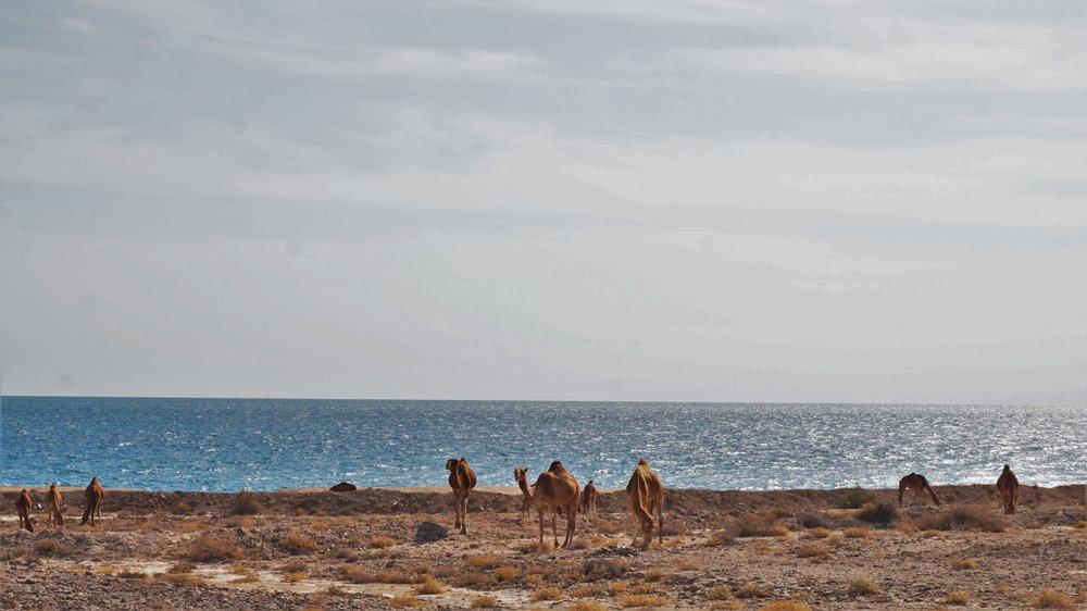 The beaches on Qeshm island Iran
