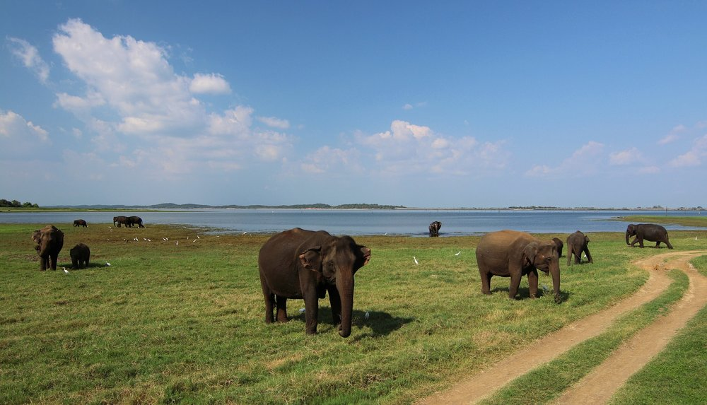 Sri Lanka itinerary national park-min.jpg