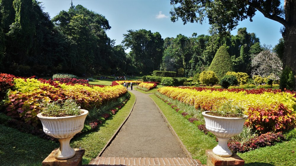 The kandy botanic gardens are one of the best attractions in Sri Lanka