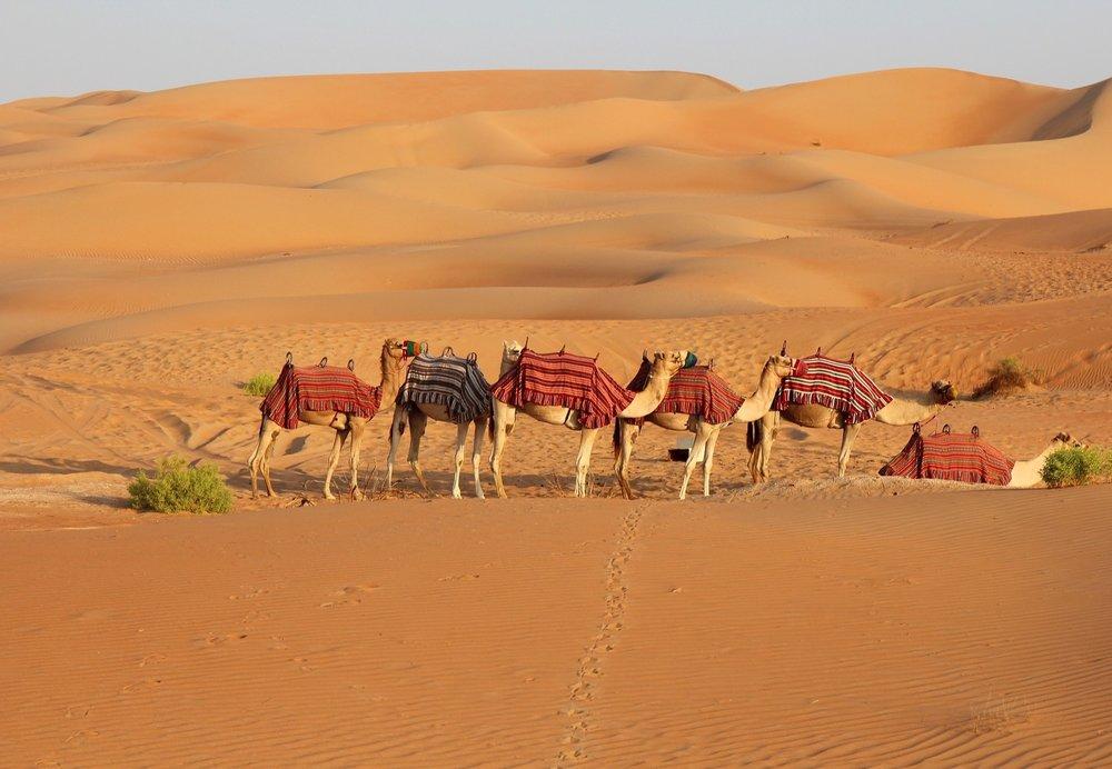 Desert tour Pushkar