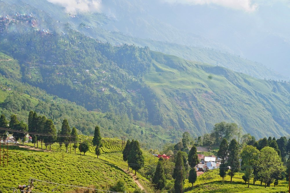 Tea plantation in Darjeeling. One of the best things to see in Darjeeling. Ilam to Darjeeling with public transport.