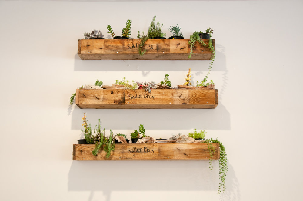 Plantboxes.jpg