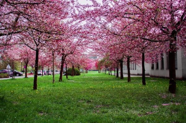 beautiful-bloom-blooming-1043458.jpg