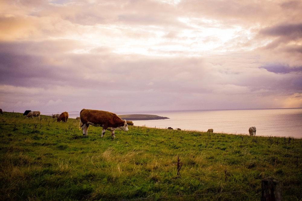 Wheems Organic Farm, Orkney, Scotland