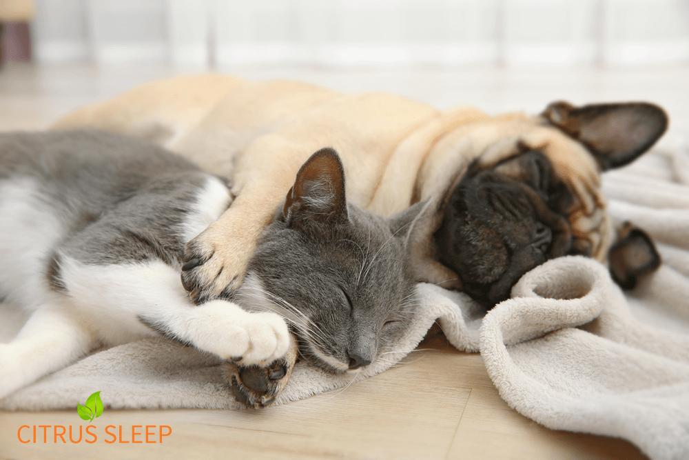 Adopt-a-Pet.com Pet Adoption Services