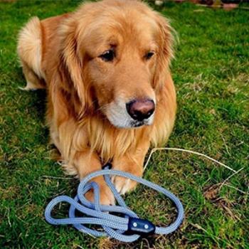 PupJoy Susatainable Dog Leash