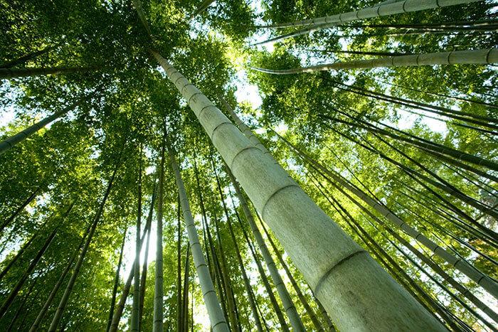 Luxor Linens Environmentally Friendly Bamboo material