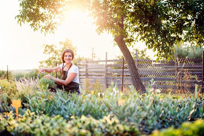 Our Green House European Harvest Basket