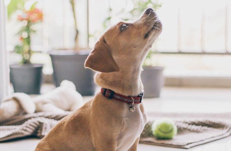 PupJoy Bo's Bones Organic Bella's Hearts Dog Treats