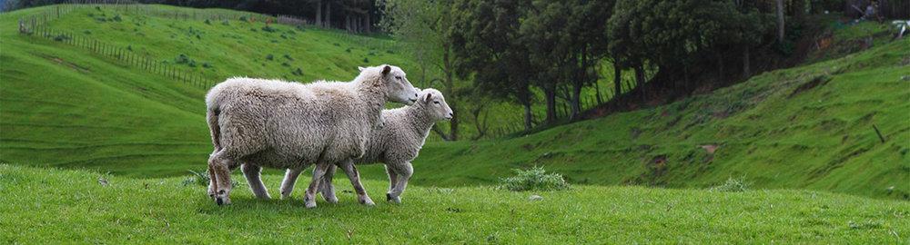 Sweet Zzz Natural Wool