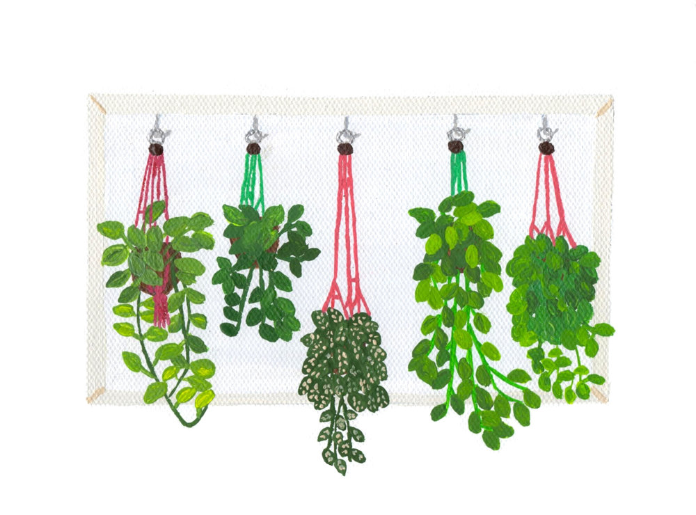Hanging Plants 2.jpg