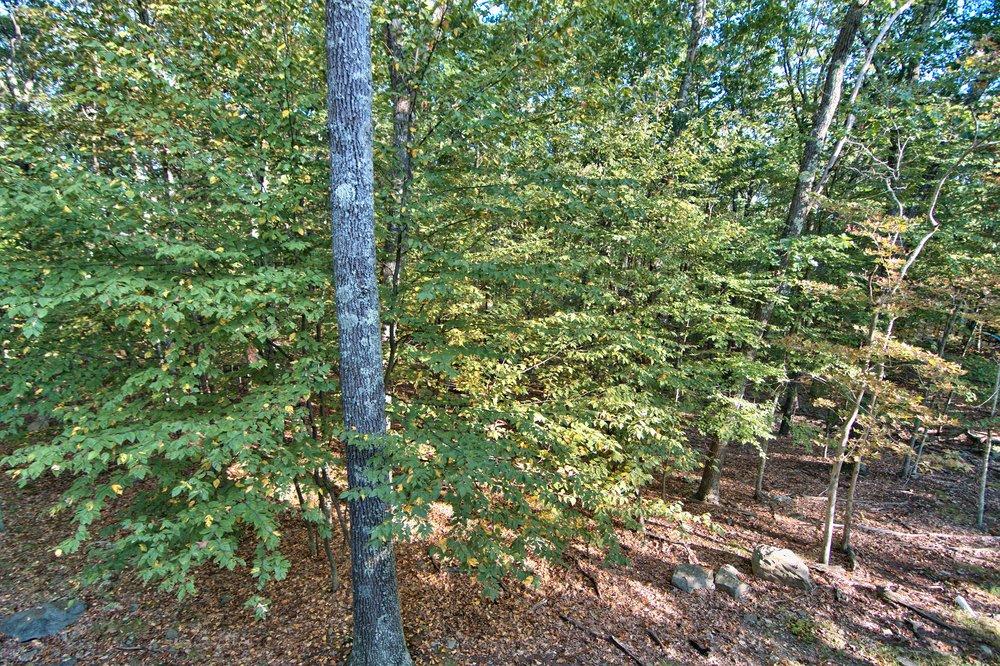 Exterior Deck View 3.jpg