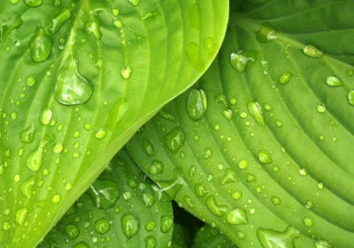 water on leaves - dew.jpeg