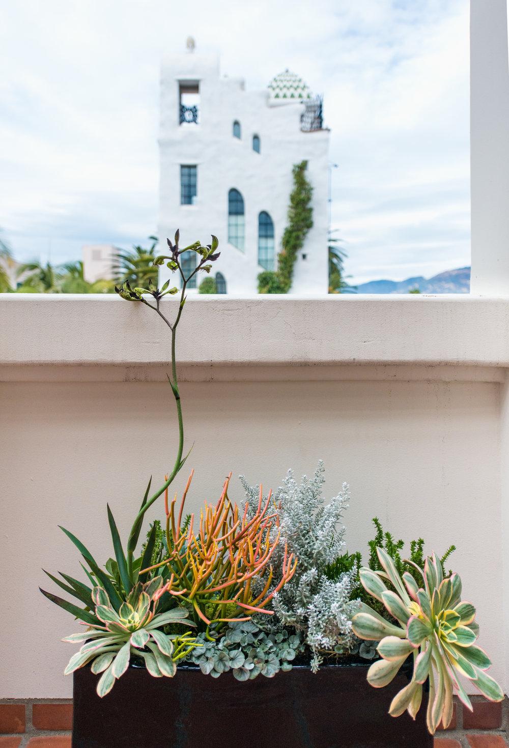 22_Succulents_kangaroo_paw_outdoor_EL.jpg