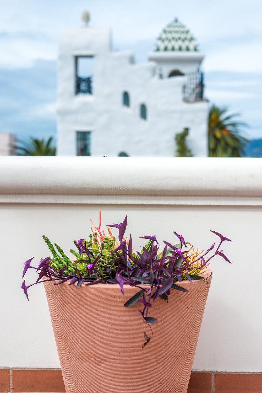 19_Outdoor_Cactus_Purple_Business_EL.jpg