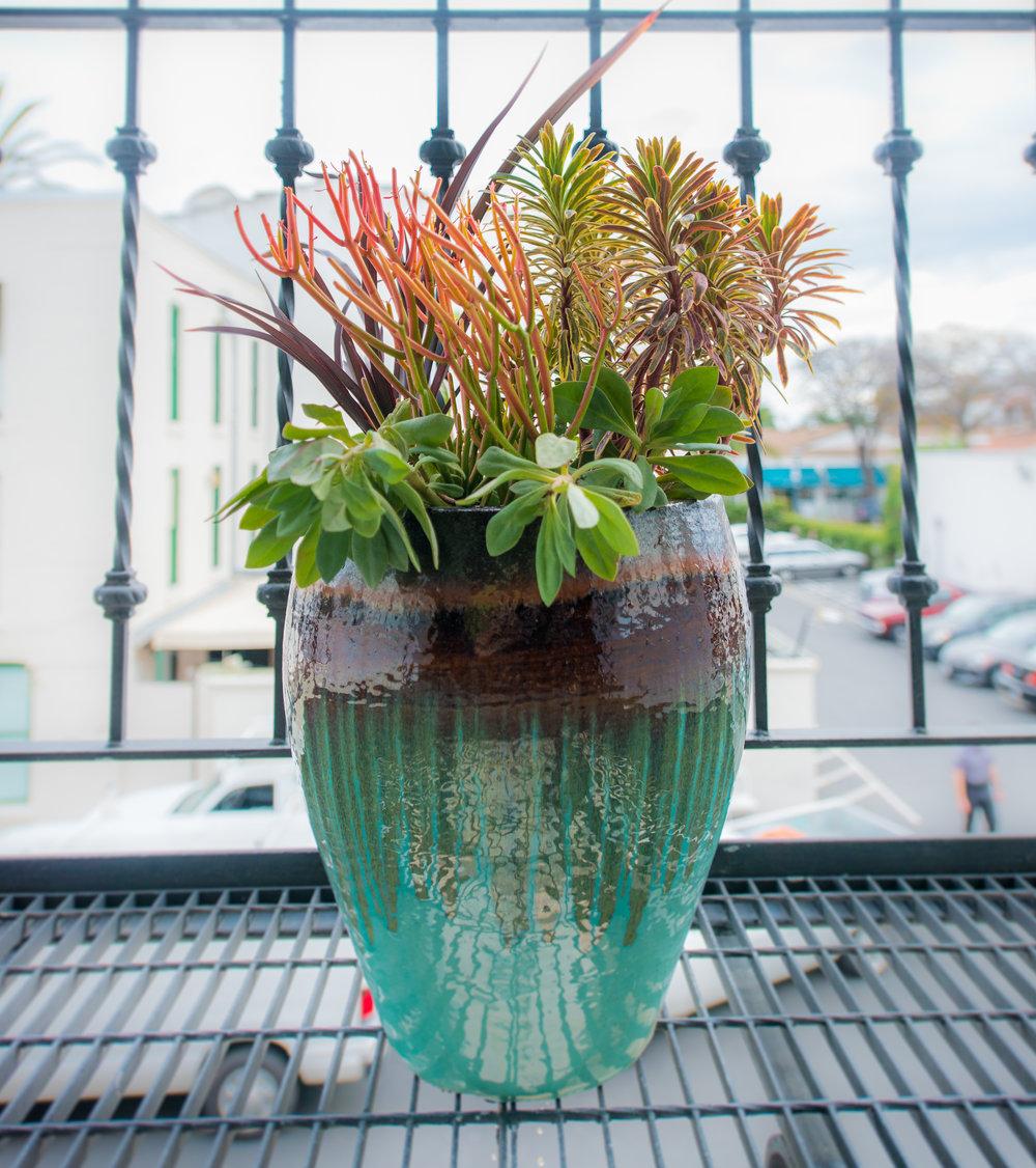 24_Succulents_Outdoor_Plants_Glazed_Pots_Business_EL.jpg