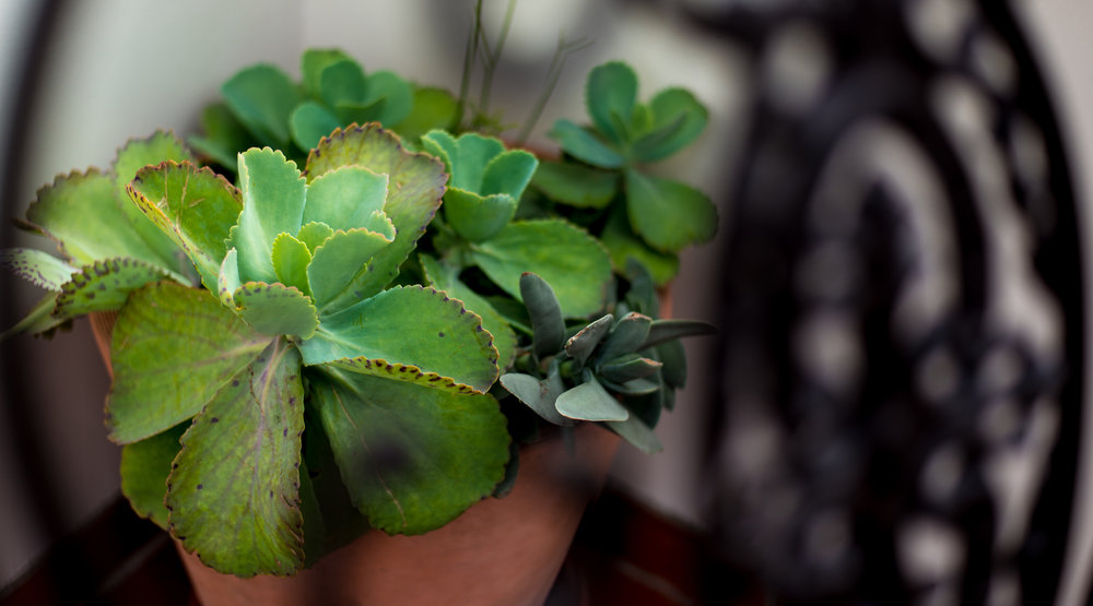 26_Succulents_Terra_Cotta_Pot_Outdoor_Business_EL.jpg