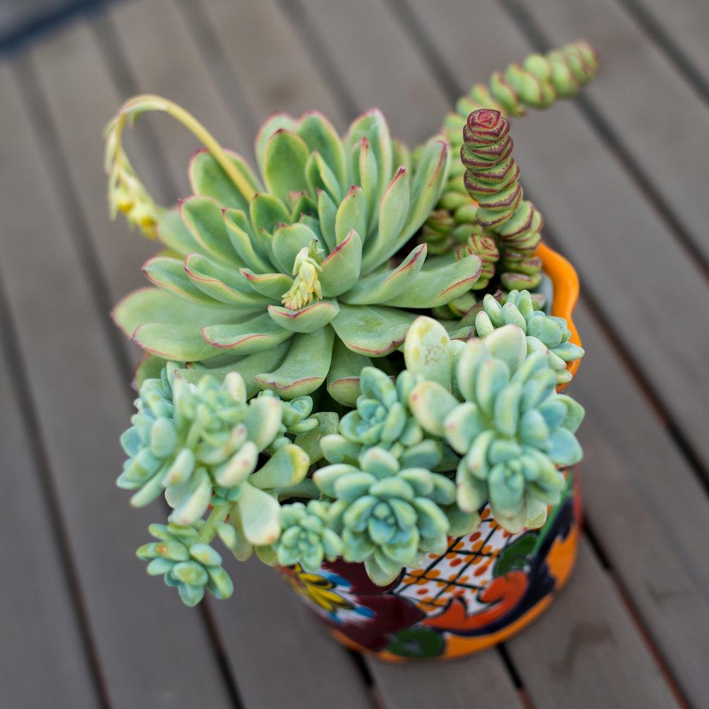 27_Succulent_Outdoor_mini_Mexican_Pot_Business_EL.jpg
