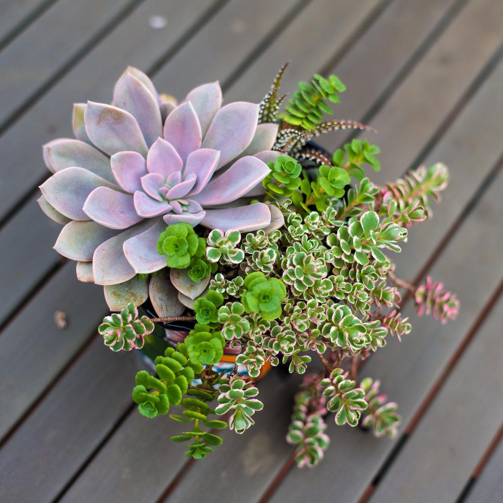 28_Succulent_Outdoor_Mexican_Mini_Pot_Business_EL.jpg