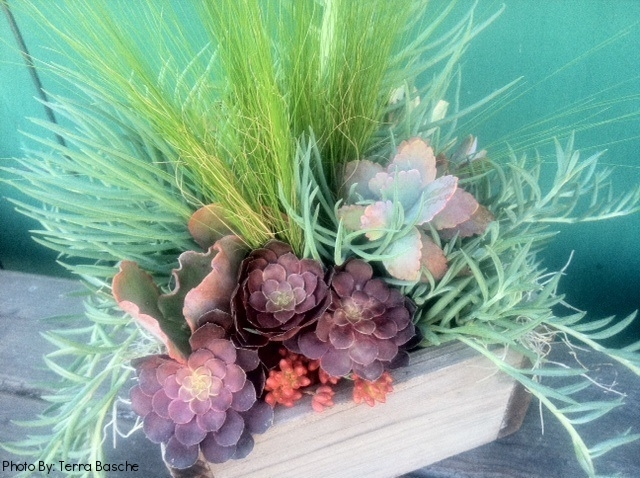 33_Succulents_rustic_box_Outdoor_Business_EL.jpg