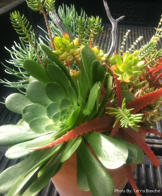 34_Succulents_Outdoor_Terra_Cotta_Business_EL.jpg