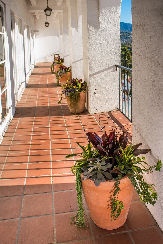 17_Succulent_outdoor_large_terra_cotta_business_EL.jpg