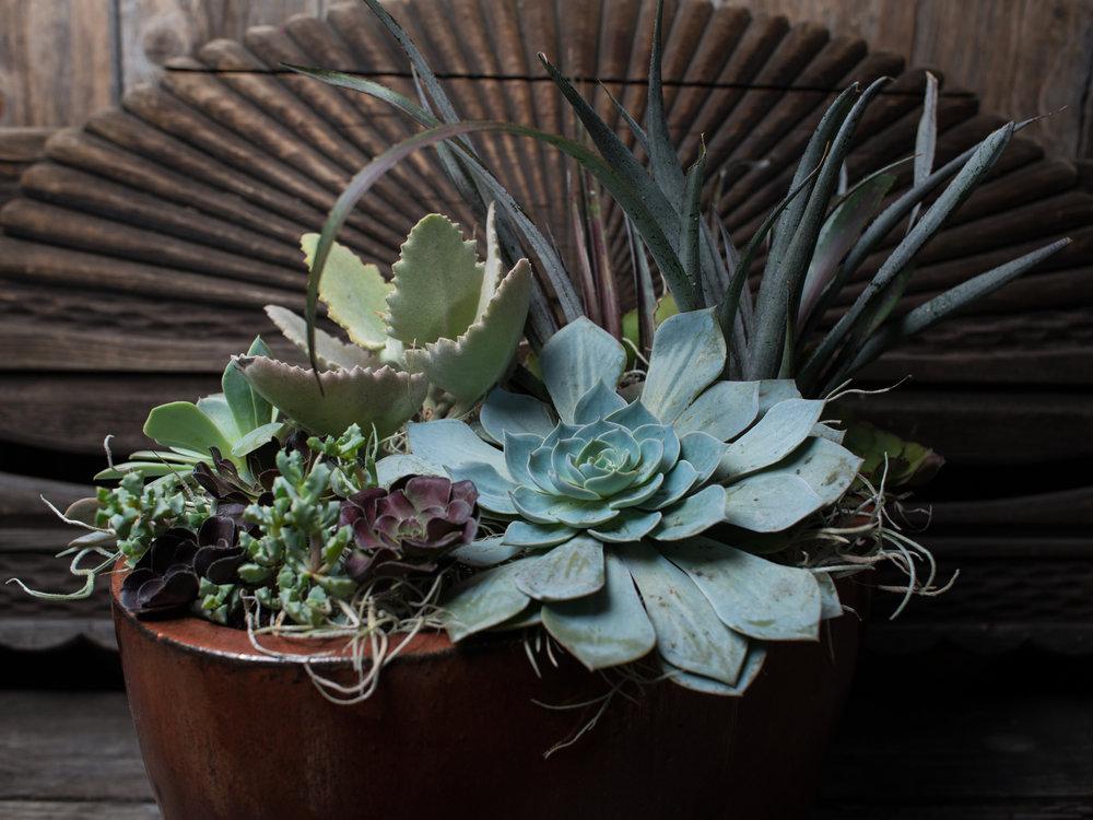 36_Succulents_Glazed_Pot_Outdoors_business_EL.jpg
