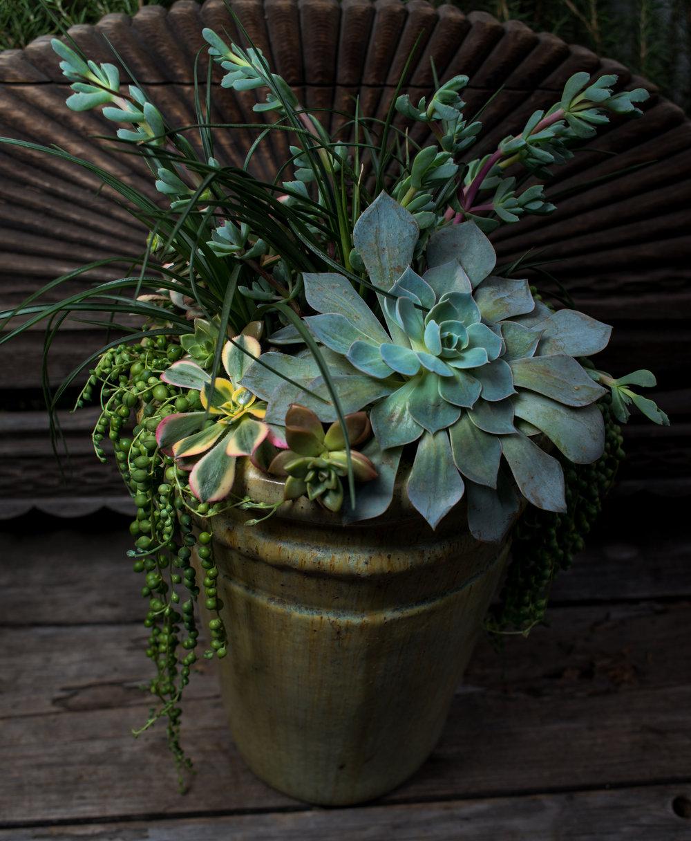 35_Succulents_Glazed_pot_outdoor_business_EL.jpg