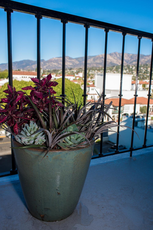 37_Succulents_Glazed_Pot_Outdoors_Business_EL.jpg