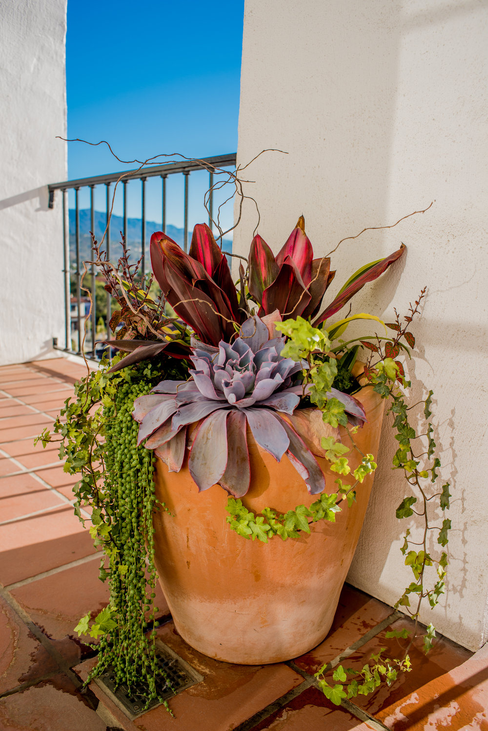 18_Succulent_Plants_large_outdoor_business_EL.jpg