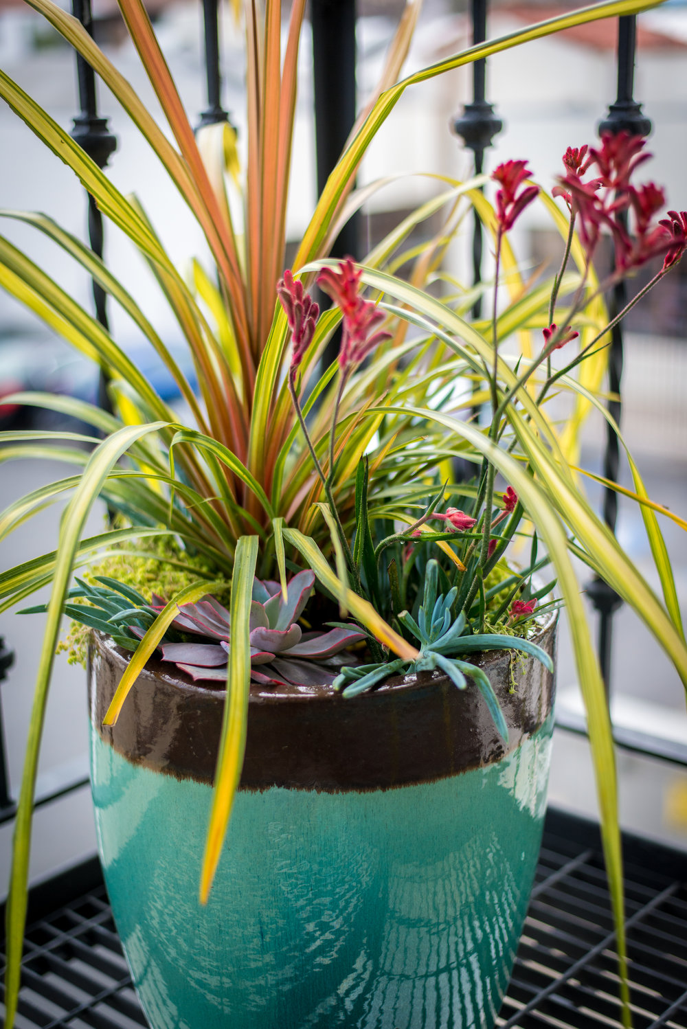 23_Succulent_Kangaroo_Paw_Grass_Outdoor_Business_EL.jpg