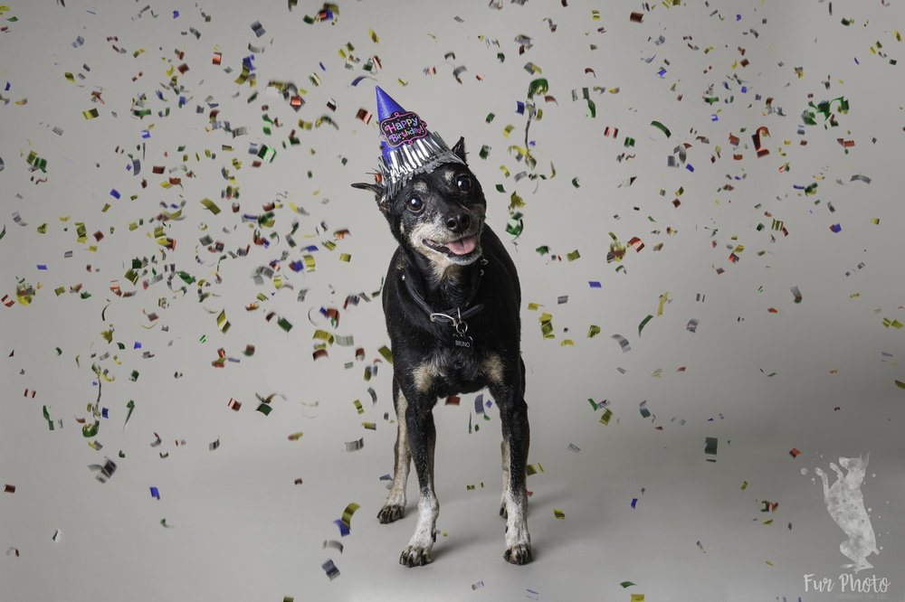 dog birthday photographer.jpg