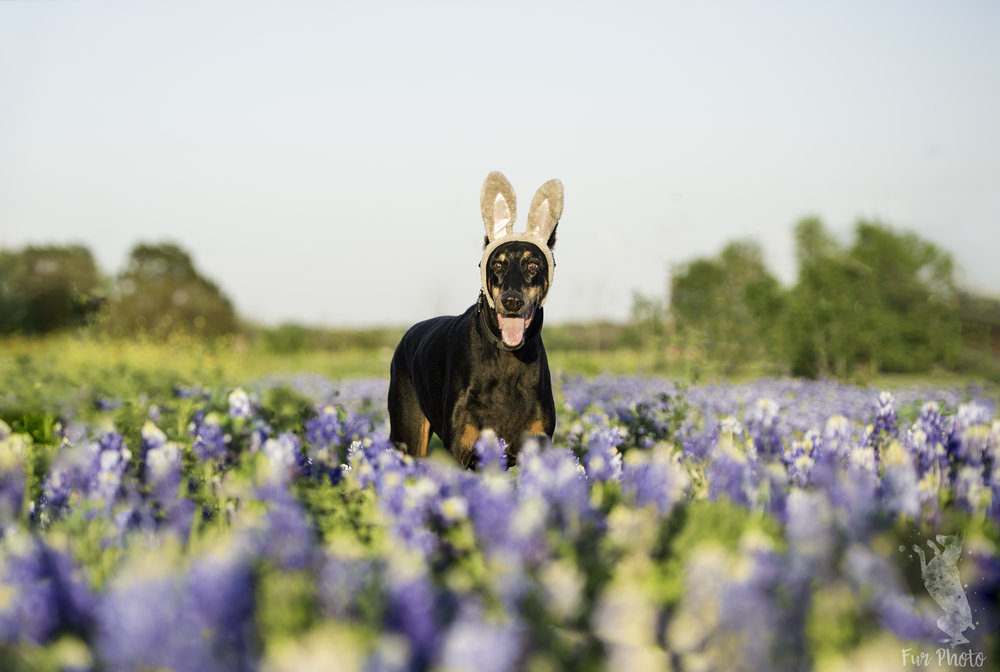 Austin dog photographer - 4296.jpg