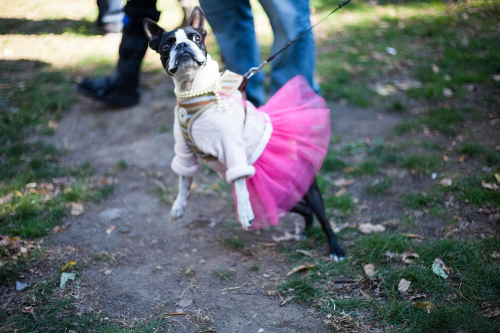 thompkin-square-park-dog-parade-2015_35230413906_o.jpg