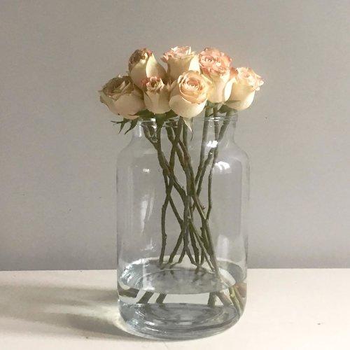 Home Aurora Rose